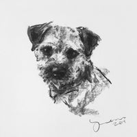SOLD small Border Terrier Charcoal sketch ORIGINAL
