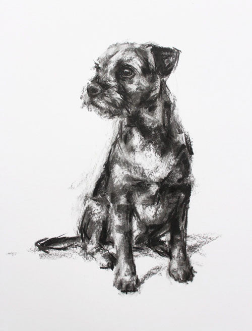 SOLD Border Terrier Charcoal sketch ORIGINAL
