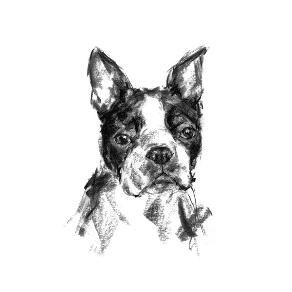 Boston Terrier Sketch Print