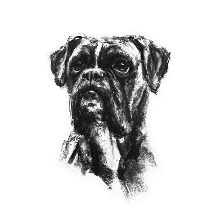 SOLD Boxer Portrait Charcoal sketch ORIGINAL - large
