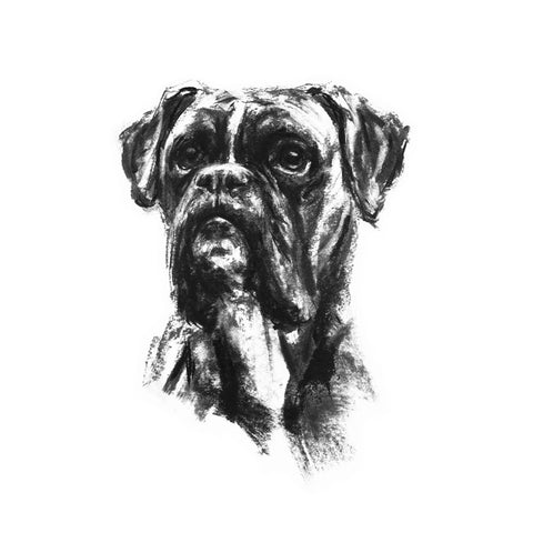 Boxer Dog Sketch Print