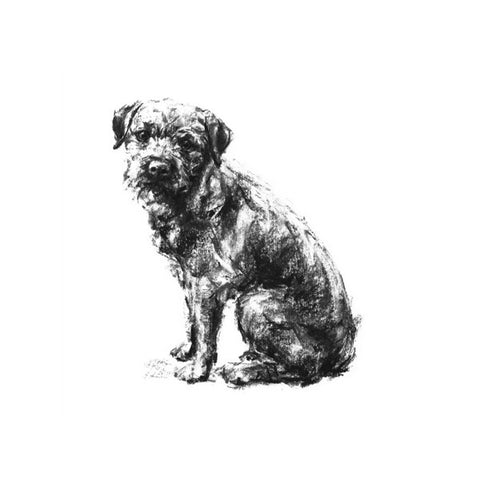 Border terrier Sketch Print
