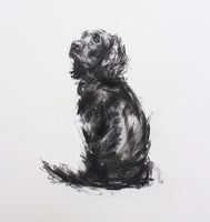 SOLD Spaniel Charcoal sketch ORIGINAL