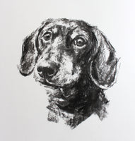 Dachshund portrait - charcoal sketch ORIGINAL drawing