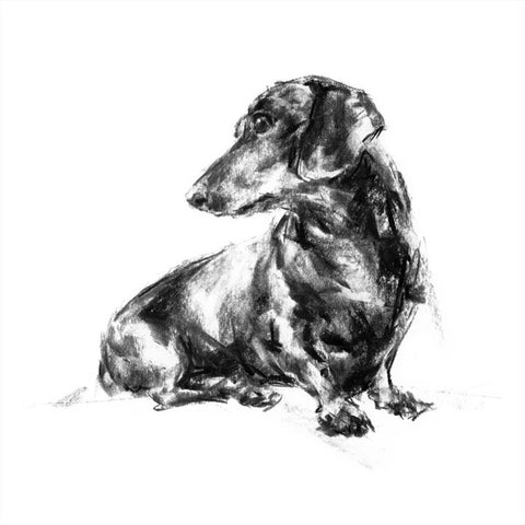 Dachshund Turning Sketch Print