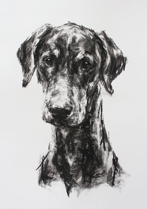 Large Study for a Doberman - Charcoal on paper ORIGINAL drawing