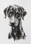 SOLD Large Study for a Doberman - Charcoal on paper ORIGINAL drawing