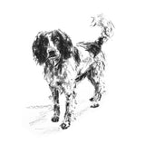 """Eager"" Springer Spaniel Sketch Print"