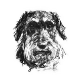 """Endeavour"" Wire-Haired Dachshund Sketch Print"