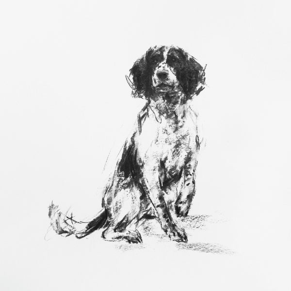 Springer Spaniel Charcoal sketch ORIGINAL drawing
