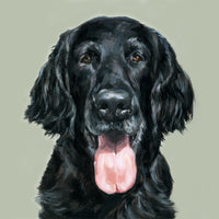 5. Flat-coated Retriever Limited Edition Print