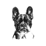 French Bulldog Sketch Print
