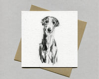 """Whippet Gentle Portrait""  Fine art card"