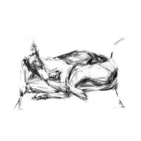 """Great Lengths"" Charcoal whippet sketch ORIGINAL drawing"