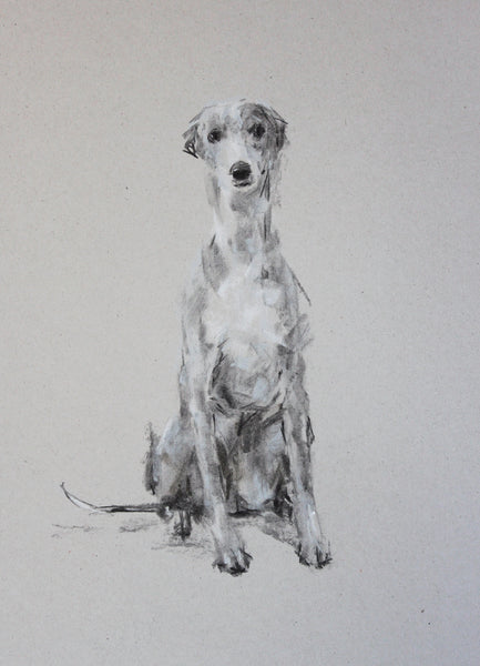 SOLD Grey Gentle Charcoal sketch ORIGINAL