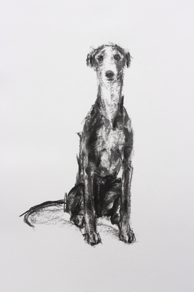SOLD Sighthound Sitting Charcoal sketch ORIGINAL