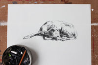 SOLD - Sleeping Whippet Charcoal sketch ORIGINAL