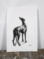 Study for Hope sighthound Charcoal sketch ORIGINAL