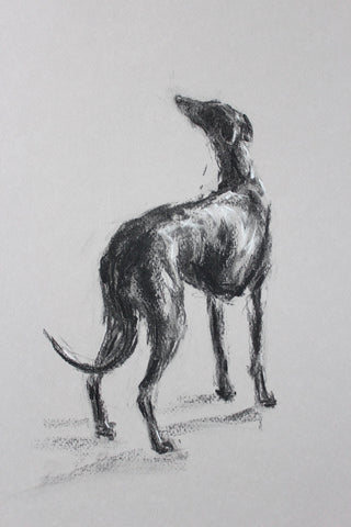 SOLD Study for Hope sighthound Charcoal/Chalk sketch ORIGINAL