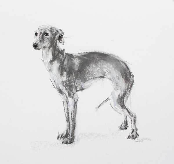 SOLD Italian Greyhound Charcoal pastel sketch ORIGINAL