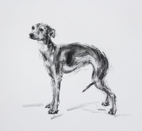 SOLD - Italian Greyhound Charcoal sketch ORIGINAL