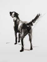 "SOLD ""After the Swim"" Labrador ink on paper - Original Dog Drawing"
