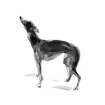 Whippet Standing Ink Sketch Print