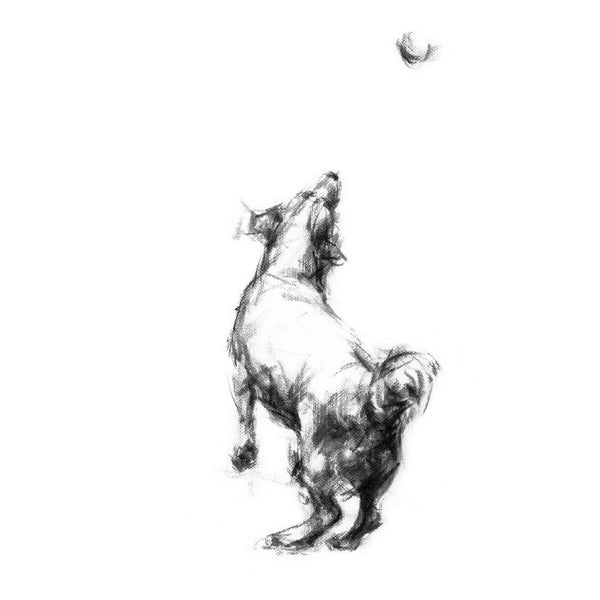 Jumping Jack Russell Sketch Print