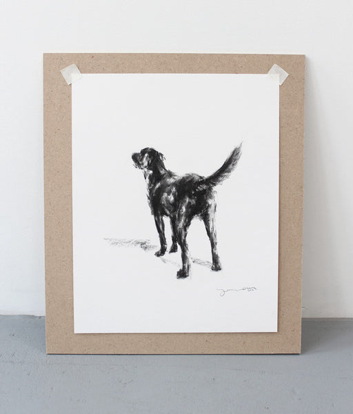 Charcoal drawing of a labrador