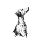 Lurcher, drawing by Justine Osborne, reference by Penelope Malby Photography