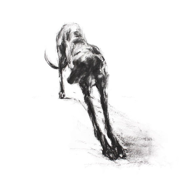 """The Long Stretch"" Sighthound Sketch Print"