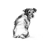 Looking Back Terrier Sketch Print