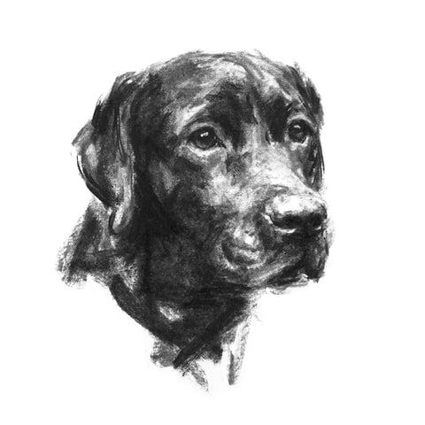 Loyalty Black Labrador Sketch Print