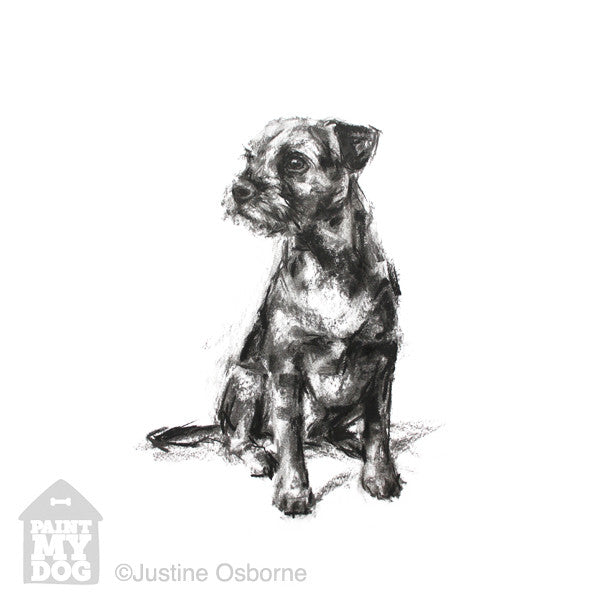 Border terrier print, border terrier art, sketch of a border terrier
