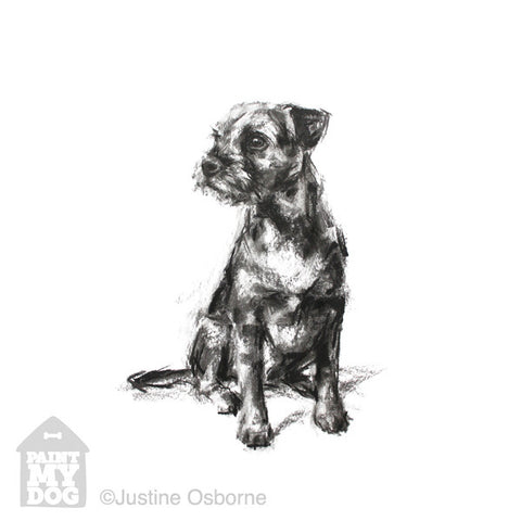 Sitting Border terrier Sketch Print