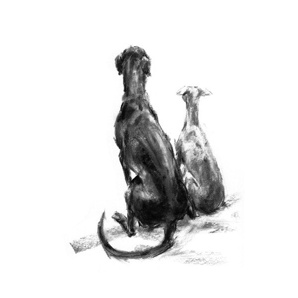"""Patience"" Sighthounds Sketch Print"