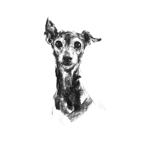 """Pippa"" Italian Greyhound Sketch Print"