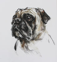 SOLD Pug Charcoal/Chalk sketch ORIGINAL