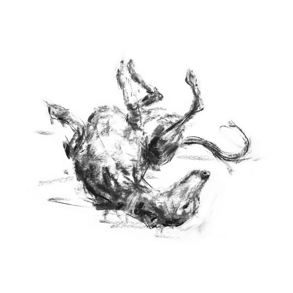 """The Roach Pose""  Whippet Sketch Print"