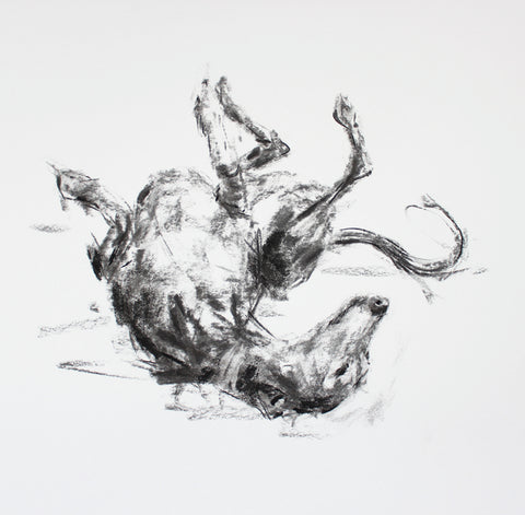 "SOLD ""The Roach Pose"" Charcoal whippet sketch ORIGINAL"