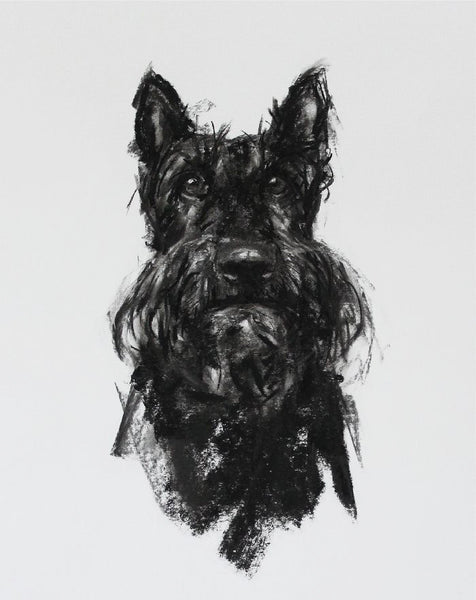 SOLD Scottie Portrait Charcoal sketch ORIGINAL
