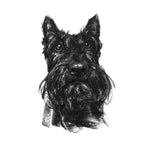 Scottie Dog Sketch Print