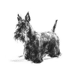 Standing Scottie Sketch Print