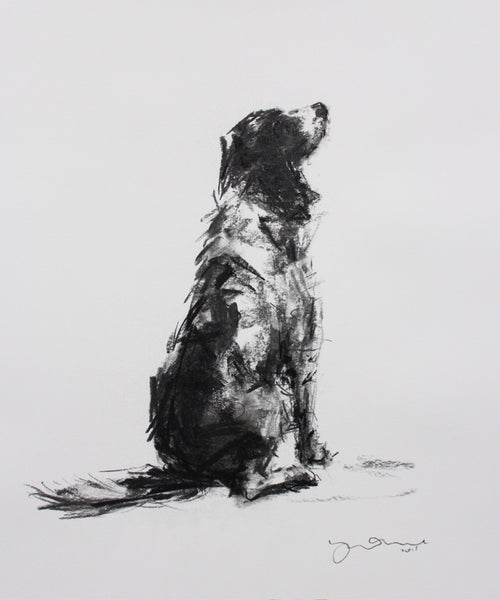 """The Patient Springer"" charcoal on paper - Original Dog Drawing"