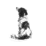 Sitting Springer Spaniel Sketch Print