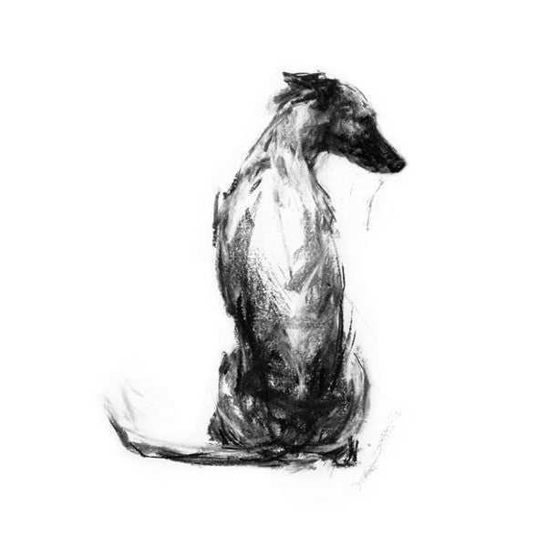 whippet drawing, whippet print, dog art, justine osborne