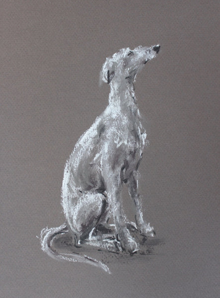 Whippet study pastel ORIGINAL dog drawing - Small