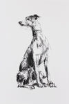 SOLD - Whippet Turning Charcoal sketch ORIGINAL