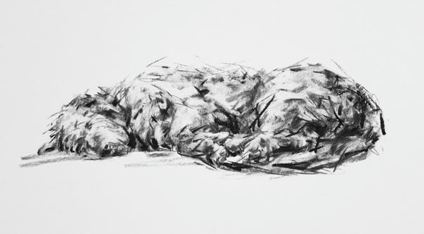 Sleeping Lurcher Charcoal  sketch ORIGINAL drawing