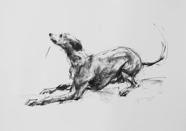 "SOLD ""Wanna Play?"" Large Charcoal Whippet Study sketch ORIGINAL"